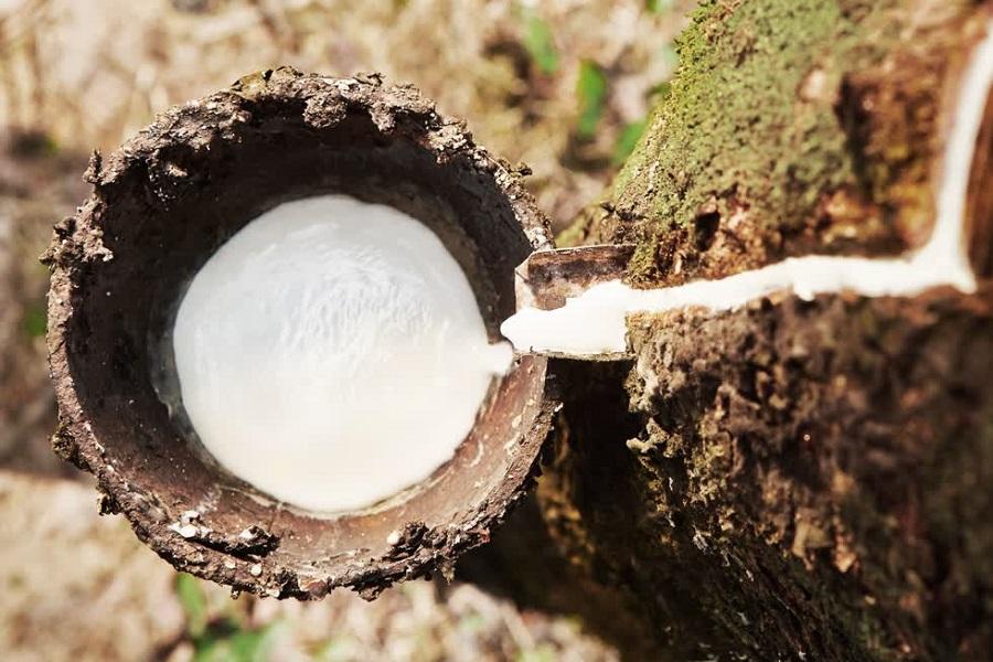 Thái Lan cam kết bảo hiểm giá sàn mủ cao su