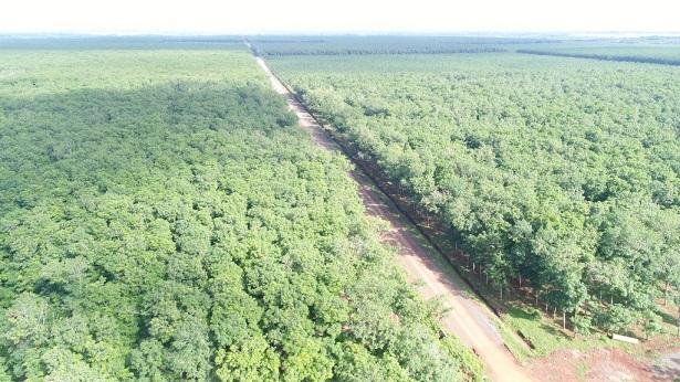 Phát triển VRG theo hướng bền vững, hài hòa giữa phát triển kinh tế – trách nhiệm với xã hội – bảo vệ môi trường