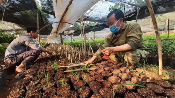 Bình Phước: Gieo ươm hơn 90.000 cây lâm nghiệp các loại để trồng rừng phân tán