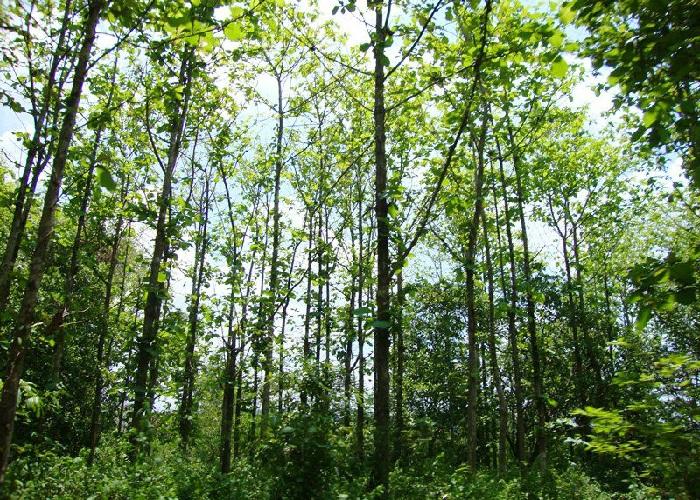 8 tháng đầu năm, Đồng Nai trồng được 3.365 ha rừng