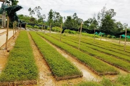 """Bài 2: Doanh nghiệp """"chung tay"""" trồng rừng có chứng chỉ"""