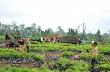 CĐ Cao su Chư Prông thăm hỏi công nhân trồng mới tại Campuchia