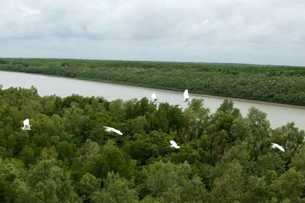 Phê duyệt đề án về bảo vệ và phát triển rừng vùng ven biển giai đoạn 2021-2030