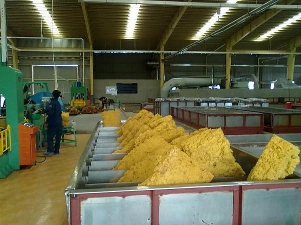 Xuất khẩu cao su Việt Nam sang thị trường Mỹ sẽ tiếp đà tăng