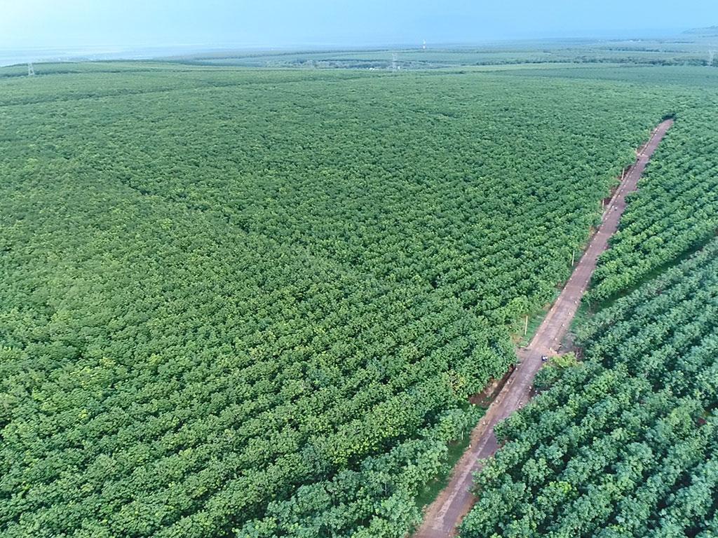 VRG xanh hóa bền vững vùng biên