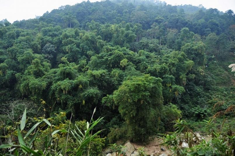 Lào Cai: Tỷ lệ che phủ rừng tăng 1,26%