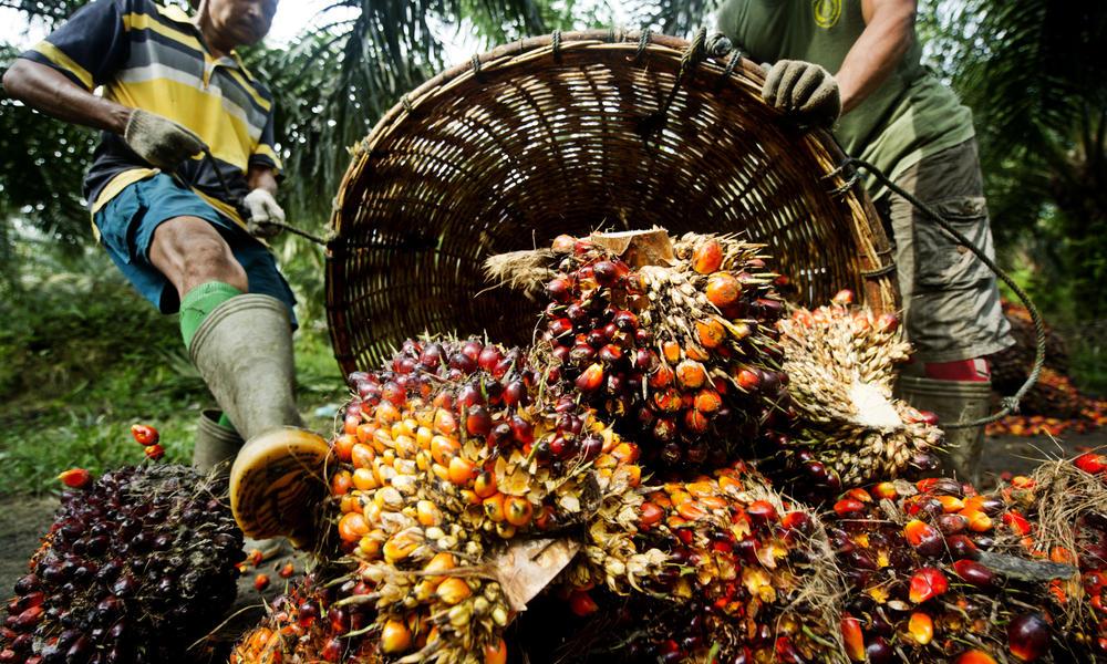 Ngân hàng Thế giới: Giá dầu thực vật tăng mạnh trong năm nay