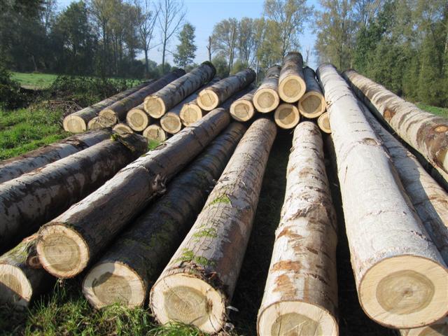 Chủ động nguyên liệu phục hồi sản xuất ngành gỗ