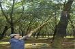 Bộ trưởng Bộ NN&PTNT: Bác bỏ thông tin cây caosu bị chặt hàng loạt