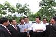 Thủ tướng Nguyễn Tấn Dũng thăm dự án phát triển cao su tại Nghệ An