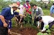 Doanh nghiệp Việt hưởng ứng Ngày trồng cây của Lào