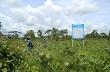 Đăk Lăk: 6 công ty lâm nghiệp hủy bỏ việc liên doanh, liên kết trồng rừng và cao su với các doanh nghiệp