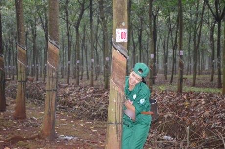 Hội thi Bàn tay vàng Cao su Bình Long: Thêm động lực hoàn thành vượt kế hoạch