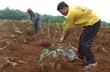 VRG sẽ trồng mới hơn 20.000 ha cao su ở Campuchia trong năm 2014