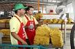 Giá cao su Tocom giảm trở lại do yên tăng