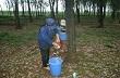 VRA khuyến cáo người trồng cao su giảm khai thác