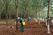 Công nhân yên tâm lao động, bám vườn cây