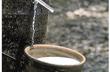 AgroMonitor: Giá mủ cao su tại Đông Nam Bộ, Tây Nguyên ngày 20/5/2014