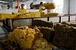 Việt-Nhật lập chuẩn cao su thiên nhiên không protein