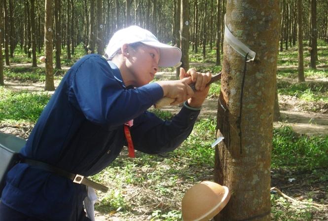 300 ngàn hecta rừng có chứng chỉ vào 2020