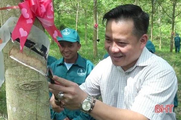 """""""Vàng trắng"""" gặp khó, Cao su Hương Khê xin trồng 840 ha keo nguyên liệu"""