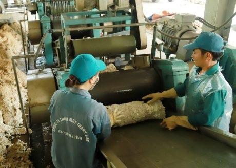 Cao su Hà Tĩnh: Quyết tâm nâng cao thu nhập cho NLĐ