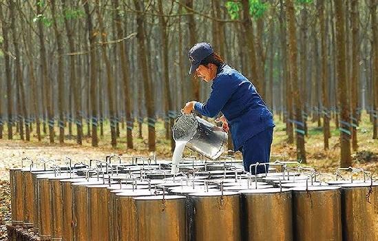 Xuất khẩu cao su tháng 8 tăng mạnh
