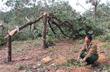 VRG trao 560 triệu đồng hỗ trợ khắc phục thiệt hại bão số 10