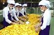 Giá cao su tăng mạnh nhờ đồng Yên giảm
