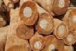 Nhập khẩu gỗ từ Campuchia và Trung Quốc chiếm gần 33% tổng kim ngạch