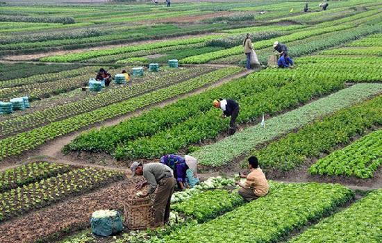 Ngành nông nghiệp tăng trưởng thần kỳ nhất trong 50 quý