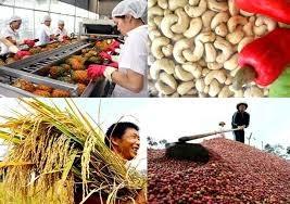 Nửa đầu năm 2019, giá mặt hàng nông sản xu hướng giảm kéo dài