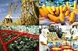 10 tháng, ngành nông nghiệp xuất siêu 8,74 tỷ USD