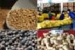 Tình hình sản xuất – xuất khẩu các nông sản chủ lực của Việt Nam đến tháng 5/2017 và dự báo