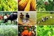 Phí thẩm định kinh doanh có điều kiện lĩnh vực nông nghiệp