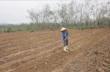 Quảng Bình: Nông dân vẫn mặn mà với cây cao su
