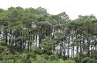 Chuyển đổi rừng sang trồng cao su: Cơ hội và thách thức