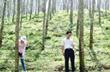 Thanh Hoá: Toàn tỉnh đạt 53% kế hoạch trồng cao su năm 2012