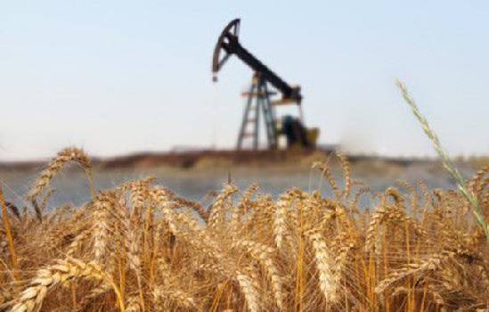 Thị trường hàng hóa ngày 18/5: Dầu vượt 80 USD/thùng, nông sản đồng loạt tăng giá
