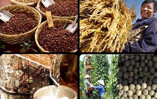 Thị trường nông sản ngày 2/7: Giá cà phê đi ngang sau một tuần giảm mạnh, cao su giảm